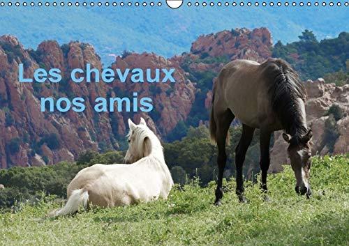 Les Chevaux Nos Amis 2016: Une Serie de Photos de Nos Amis les Chevaux (Calvendo Animaux) (French ...