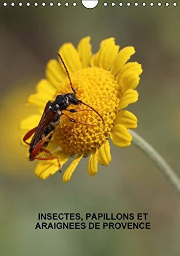 9781325132669: Insectes, papillons et araignees de Provence 2016: Les insectes, papillons et araignees de nos belles prairies (Calvendo Nature) (French Edition)