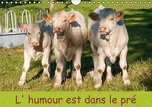 L'Humour est dans le Pre 2016: Photo de Bovins (Calvendo Animaux) (French Edition): Stephane ...