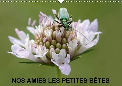 Nos Amies les Petites Betes 2016: Nos Amies Qui Vivent dans l'Herbe Haute (Calvendo Nature) (...