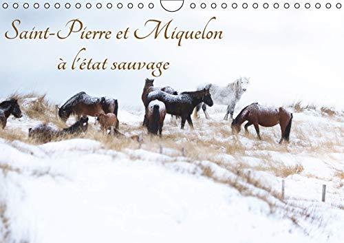 Saint-Pierre et Miquelon a l'Etat Sauvage 2016: Un Petit Bout de France Meconnu (Calvendo ...