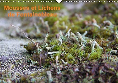 Mousses et Lichens de Fontainebleau 2016: 12 Photos des Mousses et Lichens Communs (Calvendo Nature...