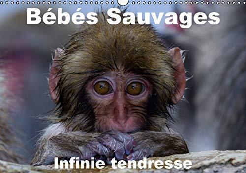 Bebes Sauvages - Infinie Tendresse 2016: Bebes Mamiferes dans Leur Environnement Naturel (Calvendo ...