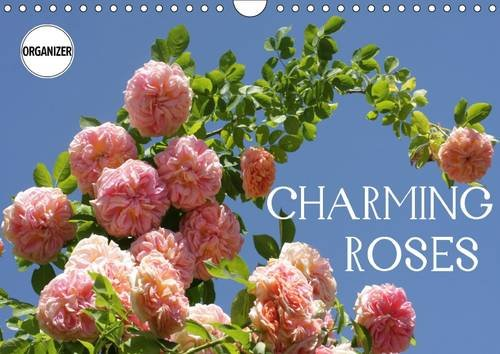 9781325135578: Charming Roses 2017: Rose is a Rose is a Rose ... (Calvendo Nature)