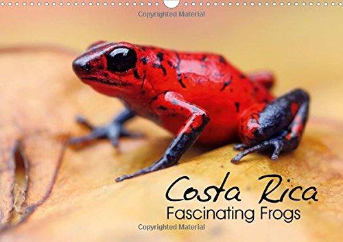 Costa Rica - Fascinating Frogs 2017: Macro: Kevin Esser