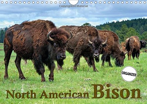 9781325140039: North American Bison 2017: The Bison or Indian Buffalo is the Largest Mammal on the North American Continent. Through the Protection of Yellowstone ... of the American West (Calvendo Animals)