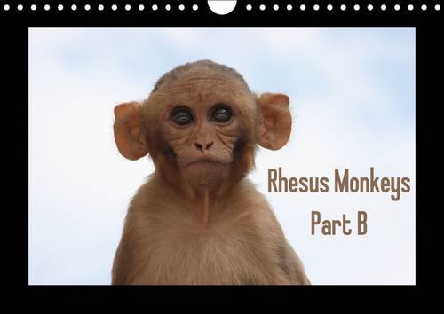 9781325152605: Rhesus Monkeys / UK-Version 2017: Part B: The Rhesus Monkey (Macaca Mulatta) is a Primate of the Species of Macaques Within the Family Cercopithecidae (Calvendo Animals)