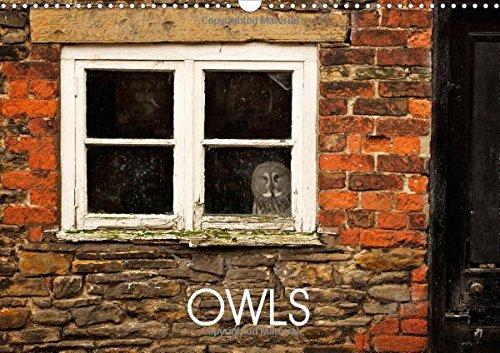 9781325173815: Owls 2017: Owl Photography (Calvendo Animals)