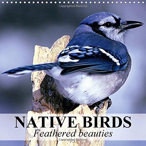 Native Birds - Feathered Beauties 2017: Beautiful Birds Around Europe