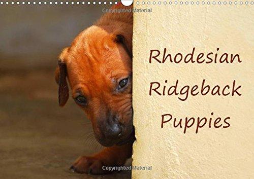 9781325186211: Rhodesian Ridgeback Puppies 2017: A Monthly Calendar with Photographs of Rhodesian Ridgeback Puppies (Calvendo Animals)