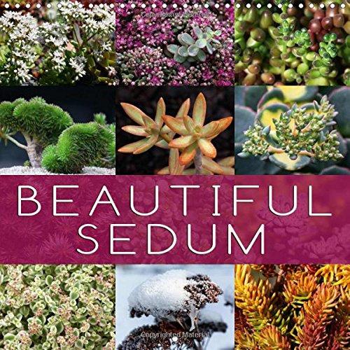 9781325195107: Beautiful Sedum 2017: Portraits of Beautiful Sedum Varieties (Calvendo Nature)