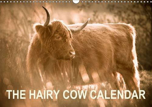 9781325201624: The Hairy Cow Calendar 2017: Evocative Images of Highland Cattle on Norfolk Grazing Marshes (Calvendo Animals)