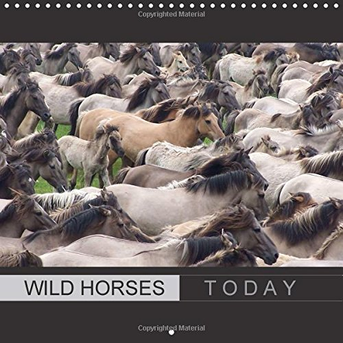 9781325219254: Wild horses today (Wall Calendar 2017 300 × 300 mm Square): With beautiful wild horses through the year (Monthly calendar, 14 pages ) (Calvendo Animals)
