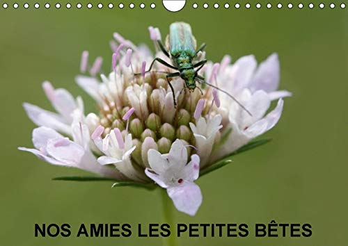 9781325294534 - JULIEN M: NOS AMIES LES PETITES BETES CALENDRIER MURAL 2018 DIN A4 HORIZONTAL - 书