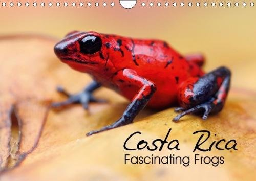 Costa Rica - Fascinating Frogs (Wall Calendar: Kevin Eßer