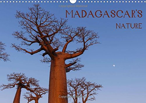 Madagascar's nature 2018: Landscapes, fauna and flora: Marcin Wielicki