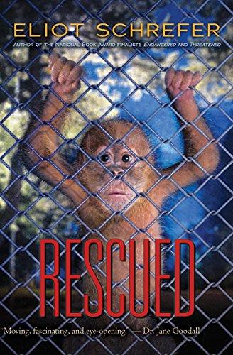 9781338196382: Rescued (Ape Quartet)