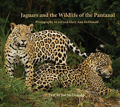 9781364705541: Jaguars and the Wildlife of the Pantanal