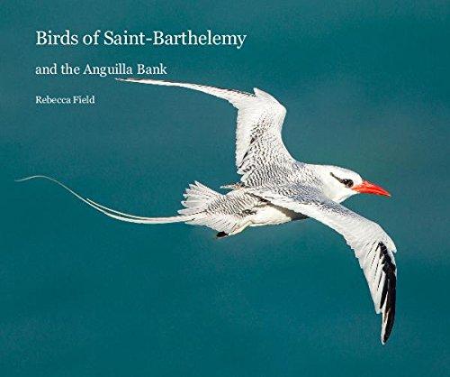 9781367204034: Birds of Saint-Barthelemy