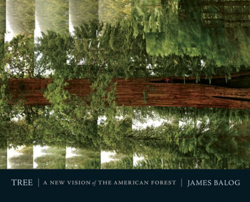 9781402767166: Tree: A New Vision of the American Forest