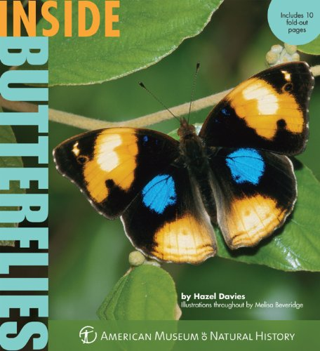 9781402781612: Inside Butterflies (Inside Series)