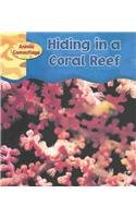 9781403431851: Hiding in a Coral Reef (Animal Camouflage)