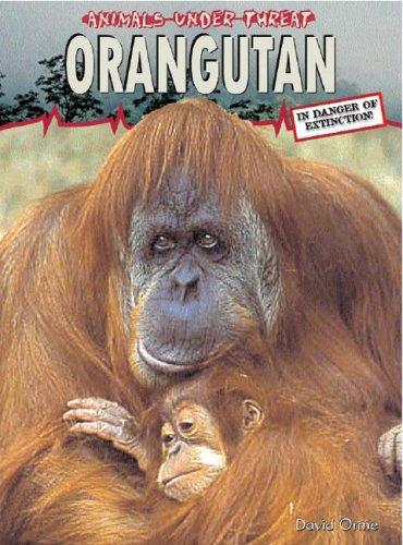 9781403455864: Orangutan (Animals Under Threat)