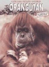 9781403456939: Orangutan (Animals Under Threat)