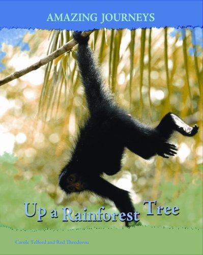 9781403488008: Up a Rainforest Tree (Amazing Journeys)