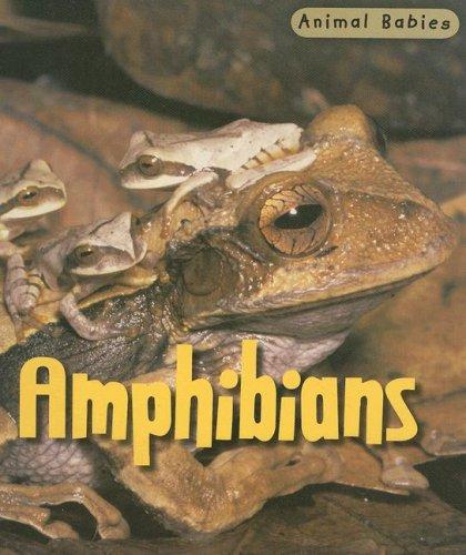 9781403492418: Amphibians (Animal Babies)