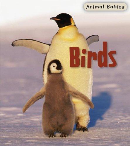 9781403492425: Birds (Animal Babies)