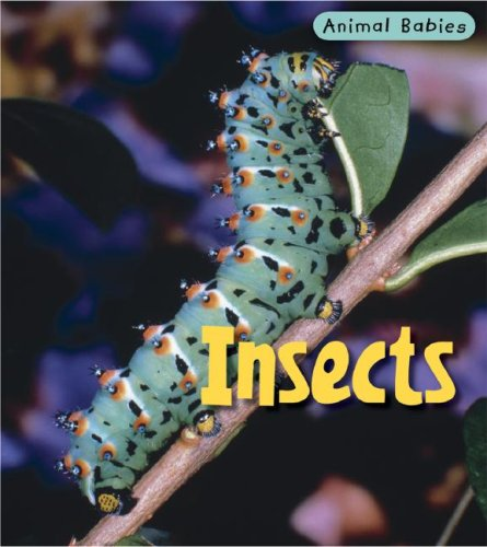 9781403492449: Insects (Animal Babies/2nd Edition)