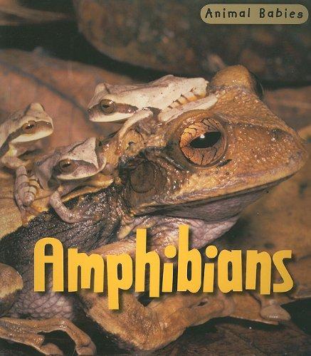 Amphibians (Animal Babies): Theodorou, Rod