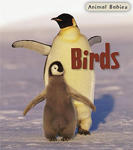 9781403492494: Birds (Animal Babies)