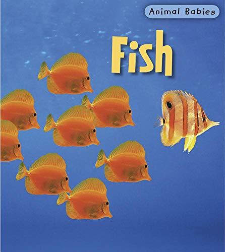 9781403492500: Fish (Animal Babies)