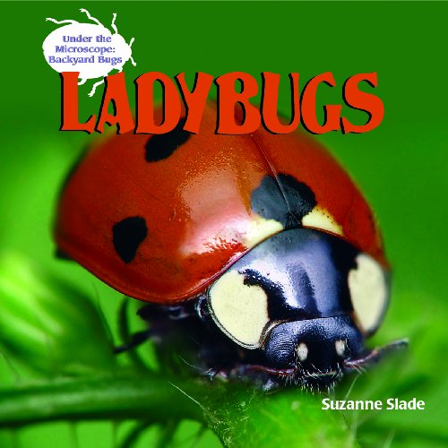 9781404238183: Ladybugs (Under the Microscope: Backyard Bugs)