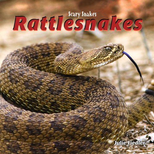 9781404238343: Rattlesnakes (Scary Snakes)
