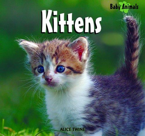 9781404241442: Kittens (Baby Animals (Kingfisher))