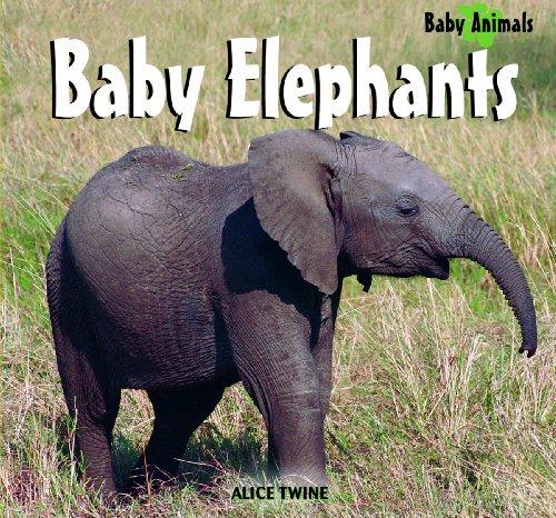 9781404241480: Baby Elephants (Baby Animals (Kingfisher))
