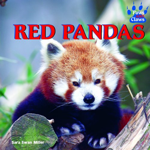 9781404241640: Red Pandas (Paws and Claws)
