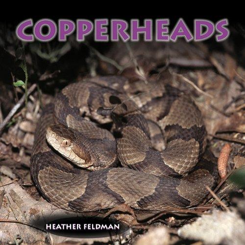 9781404255746: Copperheads