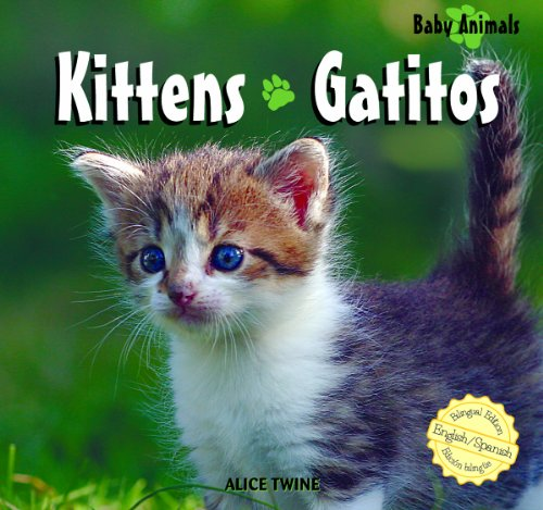 9781404276857: Kittens/ Gatitos (Baby Animals/Animales Bebé)