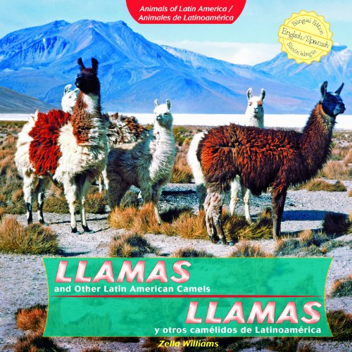 9781404281288: Llamas and Other Latin American Camels / Llamas y otros camelidos de Latinoamerica (Animals of Latin America / Animales De Latinoamerica) (Spanish and English Edition)