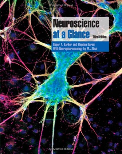 9781405150453: Neuroscience at a Glance