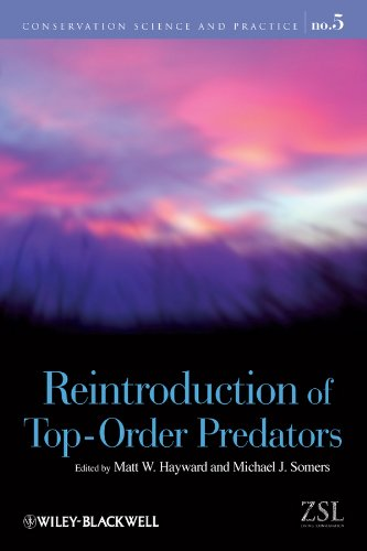 9781405176804: Reintroduction of Top-Order Predators (Conservation Science and Practice)