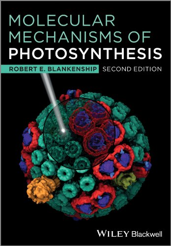 9781405189767: Molecular Mechanisms of Photosynthesis