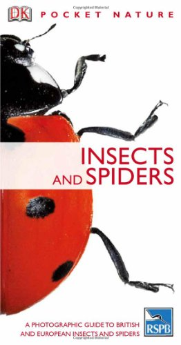 9781405305969: Insects (Pocket Nature)