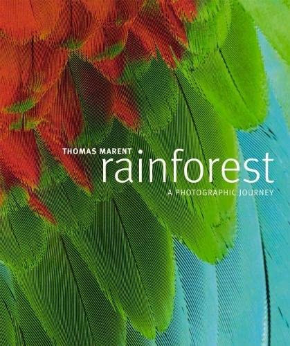9781405315302: Rainforest