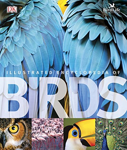 9781405362917: The Illustrated Encyclopedia of Birds (Dk)