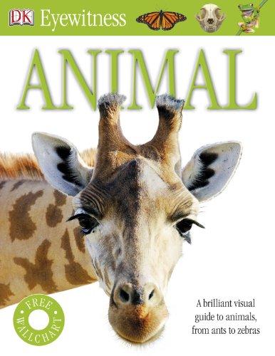 9781405378659: Animal: DK Eyewitness